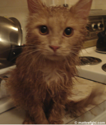 kittenafterbath